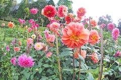 Bunte Blume mit grünem Baumhintergrund lizenzfreie stockfotografie