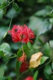 Bunte Blume vom Regenwald lizenzfreie stockfotos