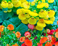 Bunte Blumen. Stockbild