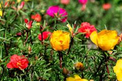 Bunte Blumen lizenzfreie stockfotos