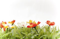 Bunte Blumen auf dem Rasen Lizenzfreies Stockfoto