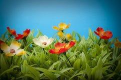 Bunte Blumen auf dem Rasen Stockbild