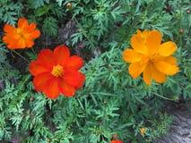 Bunte Blumen auf der Straße Stockfotografie