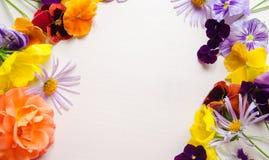 Bunte Blumen auf einem Weißrückseitenboden lizenzfreie stockfotografie