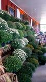 Bunte Blumen auf einer Bauernhauseingangsterrasse lizenzfreie stockfotografie