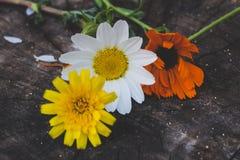 Bunte Blumen auf hölzernen Hintergründen Lizenzfreie Stockbilder