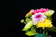 Bunte Blumen auf schwarzem Hintergrund Lizenzfreie Stockfotografie