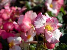 Bunte Blumen in der Blüte Lizenzfreies Stockbild
