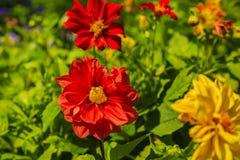 Bunte Blumen der Verschiedenartigkeit stockfotografie