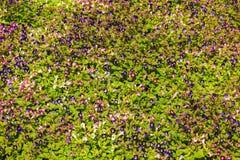Bunte Blumen der Verschiedenartigkeit stockfotos