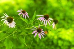Bunte Blumen der Verschiedenartigkeit lizenzfreies stockbild