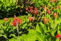 Bunte Blumen der Verschiedenartigkeit stockbilder