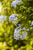 Bunte Blumen der Verschiedenartigkeit stockbild