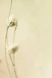 Bunte Blumen in der Weinlesefarbart auf Maulbeerpapierbeschaffenheit Lizenzfreie Stockfotografie