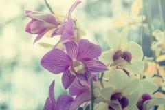 Bunte Blumen des Hintergrundes Stockbilder