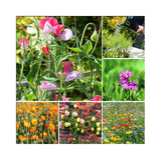 Bunte Blumen in einer Collage. Stockfotografie