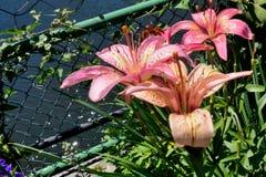Bunte Blumen entlang Gehweg der Blumen-Brücke Stockbild