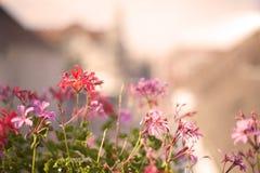 Bunte Blumen im dekorativen Blumentopf über der Stadt Lizenzfreie Stockbilder