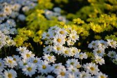 Bunte Blumen im Garten Stockfotos