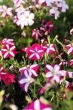 Bunte Blumen im Garten Stockfoto