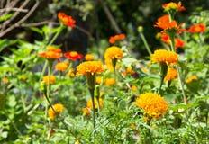 Bunte Blumen im Garten Lizenzfreies Stockfoto
