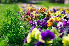 Bunte Blumen im Park Lizenzfreies Stockfoto