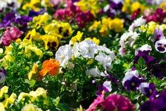Bunte Blumen im Park Stockbild