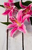 Bunte Blumen-Lilie Lizenzfreies Stockfoto