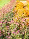 Bunte Blumen mit dem natürlichen Sonnenlicht im Garten Stockbilder