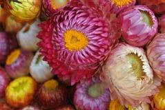 Bunte Blumen so süß Lizenzfreies Stockfoto