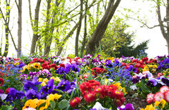 Bunte Blumen und Bäume Lizenzfreie Stockfotografie