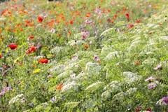 Bunte Blumen, vorgewählter Fokus Lizenzfreies Stockbild