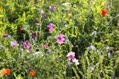 Bunte Blumen, vorgewählter Fokus Stockfotografie