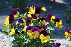 Bunte Blumenblätter Lizenzfreie Stockfotos