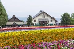 Bunte Blumenfelder von Tomita bewirtschaften, Furano, Hokkaido Stockbilder