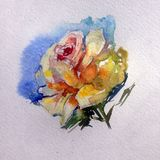 Bunte Blumenrose des Aquarellkunsthintergrundes empfindlich lizenzfreie abbildung