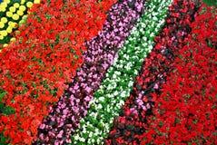 Bunte Blumenstreifen Lizenzfreies Stockfoto
