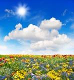Bunte Blumenwiese und grüne Rasenfläche über blauem Himmel Stockbilder