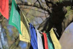 Bunte Buddhismusflaggen, die in einem Baum hängen Stockbilder