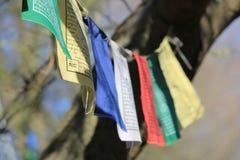 Bunte Buddhismusflaggen, die in einem Baum hängen Lizenzfreie Stockfotos