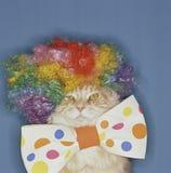 Bunte Clown-Katze Lizenzfreie Stockfotos