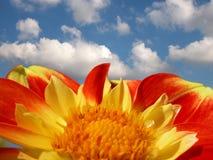 Bunte Dahlie gegen hellen Sommerhimmel Stockfotografie