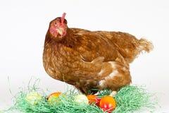 Bunte Eier im Gras mit einer braunen Henne Stockfoto