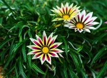 Bunte exotische Blume Lizenzfreie Stockfotografie