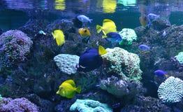 Fische auf einem Korallenriff Stockbild