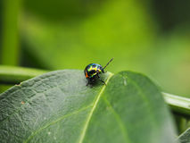 Bunte exotische Käfer Stockbild