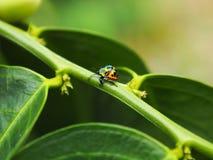 Bunte exotische Käfer Lizenzfreies Stockfoto