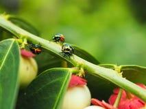 Bunte exotische Käfer Lizenzfreie Stockfotos