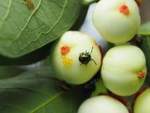 Bunte exotische Käfer Lizenzfreie Stockbilder