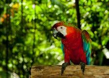 Bunte exotische Papageien in der vollen Schönheit Stockfoto